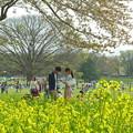 Photos: 菜の花とカップル