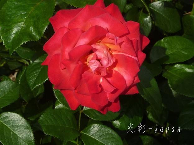 Photos: 光彩
