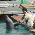 写真: イルカとふれあい
