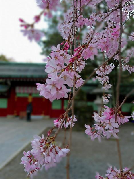 Photos: 大國魂神社