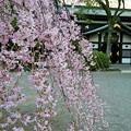 写真: 大國魂神社