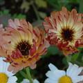 写真: なんというお花なんだろう