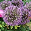 東京競馬場の花壇の花