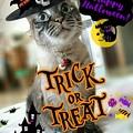 Photos: Happy Halloween♪