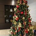 写真: クリスマスツリー