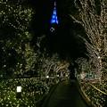 Photos: 新宿テラスシティイルミネーション