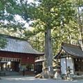 Photos: 諏訪神社