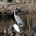 井の頭公園の池に