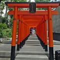 Photos: 生田神社