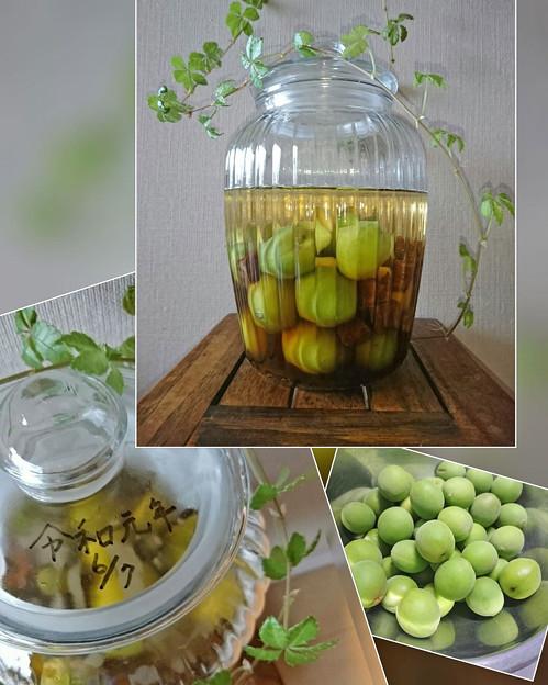 令和元年の梅酒