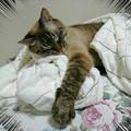 Photos: 我が家の天使の寝姿