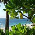 Photos: ムーンビーチ