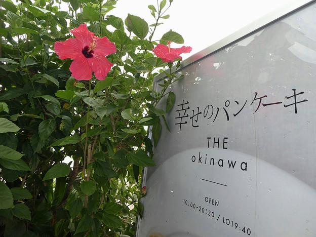 Photos: ペインテッド レディ/ハイビスカス