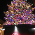 Photos: 恵比寿ガーデンプレイスのツリー
