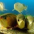 ancient fish
