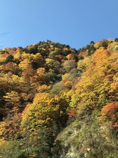 Photos: 見上げれば秋