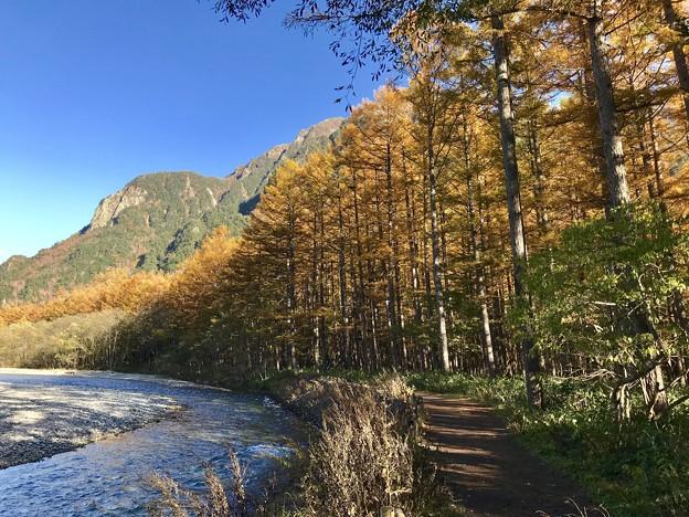 黄色い樹林
