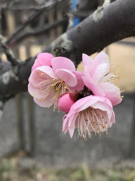 ピンクのグローブ