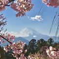 Photos: 富士山と桜