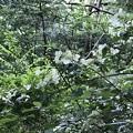 Photos: 森の乱舞