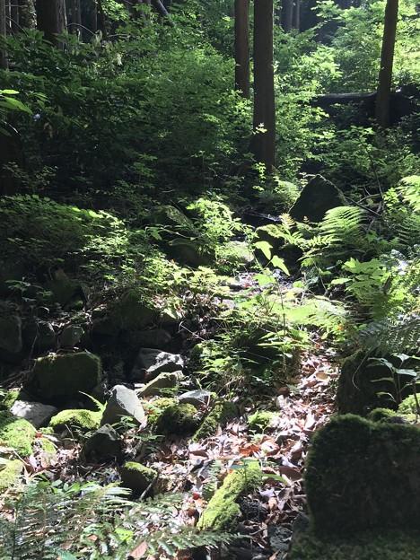 森の息遣い