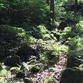 Photos: 森の息遣い