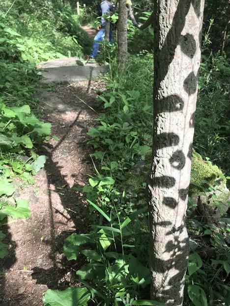森のみーつけたっ!