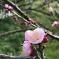 Photos: 春の産声
