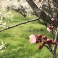 Photos: 里山の春