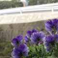 Photos: 左向け~左