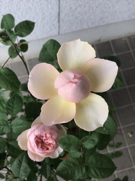 Photos: ぱっかーん