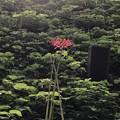 神さんの花