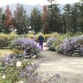 Photos: 紫パンツ
