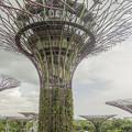 写真: 熱帯雨林