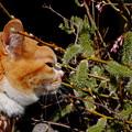 写真: 巨大ネコヤナギ