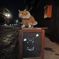 写真: 猫ちゃんの灯り絵