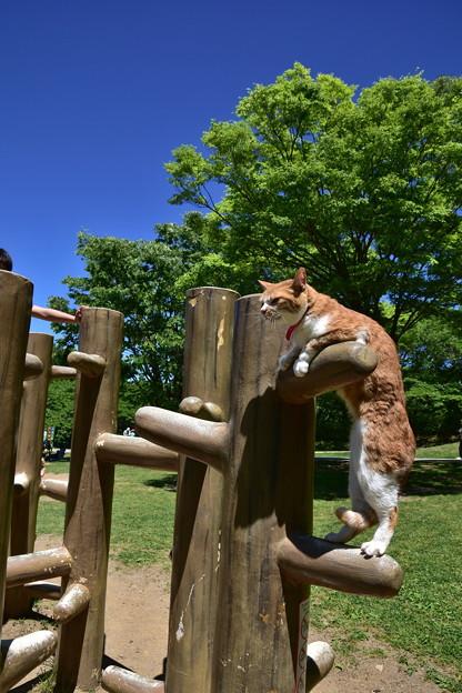 登るのは得意