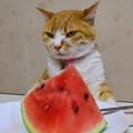 Photos: これは食べ物なのかニャ~?(みいこの場合)