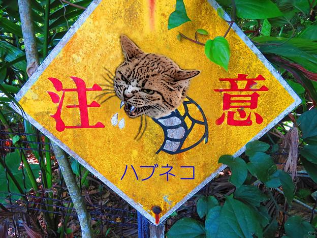 ハブ(ネコ)注意!