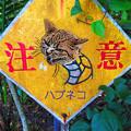 写真: ハブ(ネコ)注意!