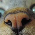 コロちゃんのお鼻