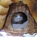 Photos: みいこの巣