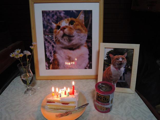みいこ、15歳お誕生日おめでとう