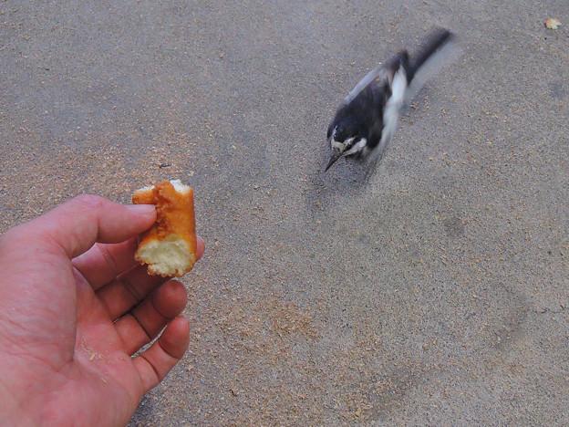 ドーナツ食べるかい?