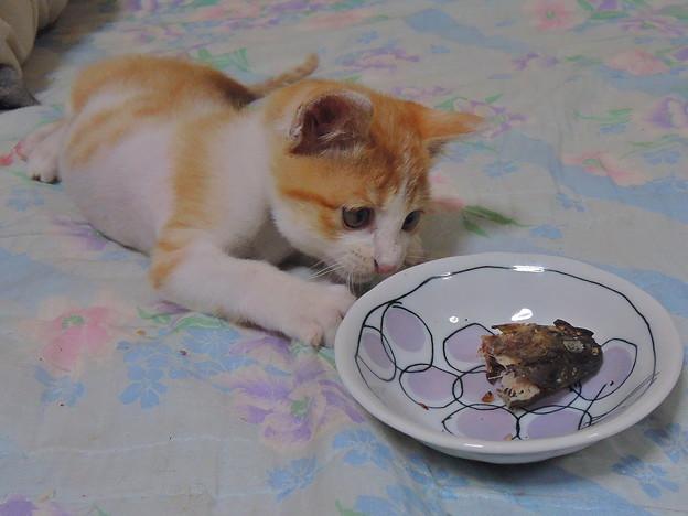 お皿に入れてあげるね