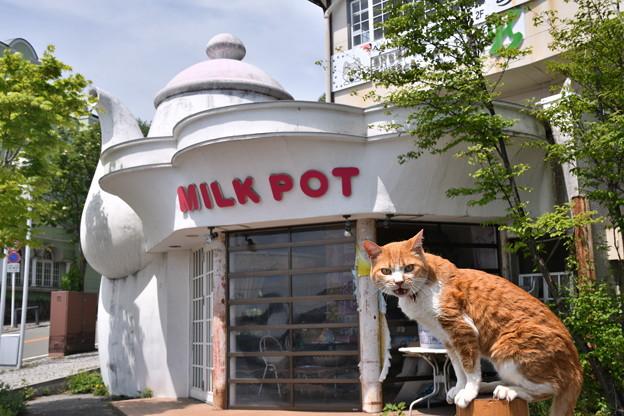 Photos: ミルクポットとみいこ