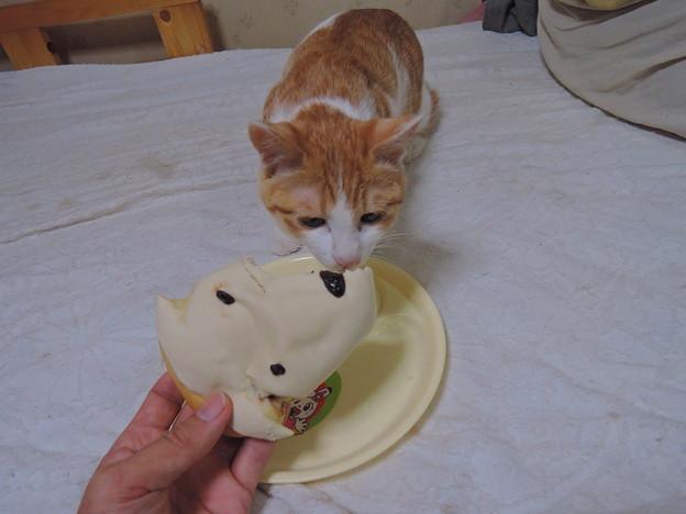 ワオンパン食べるぞ!
