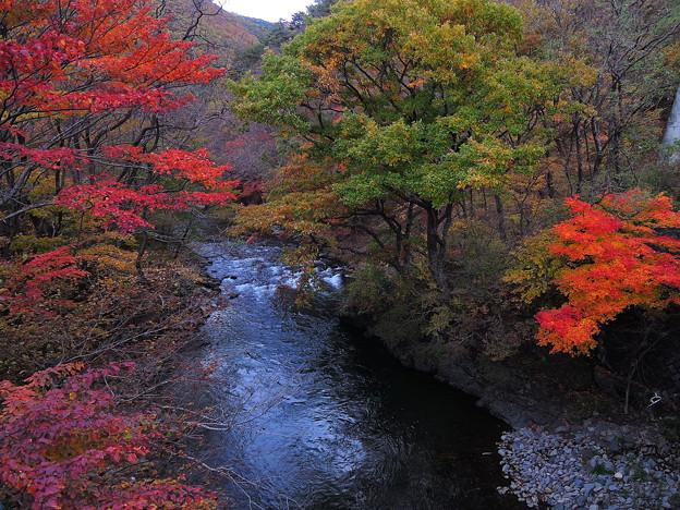 山吹山の紅葉