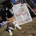 野良猫保護NPOのブース