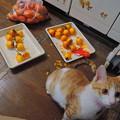 Photos: 渋いよ、この柿